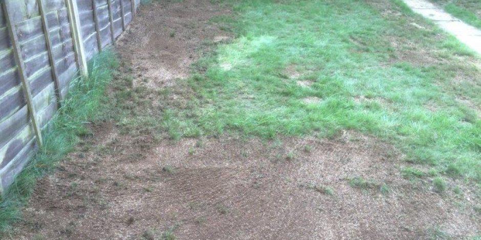 Over-Seeding