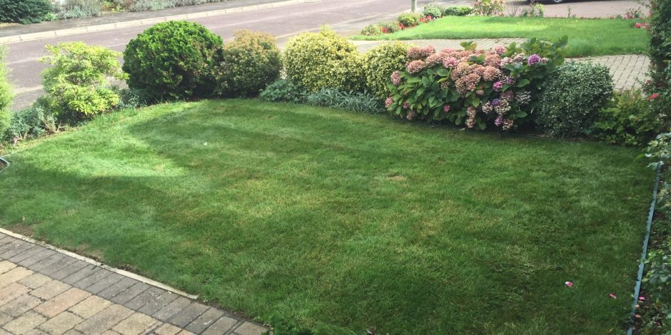 New Garden Maintenance & Lawn care,Banbury,Oxfordshire