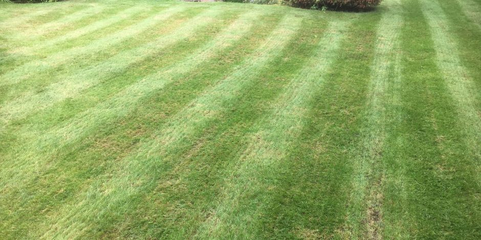 New Lawncare treatment, Wappenham, Northamptonshire