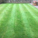 Feed and Weed Lawn treatment Hook Norton