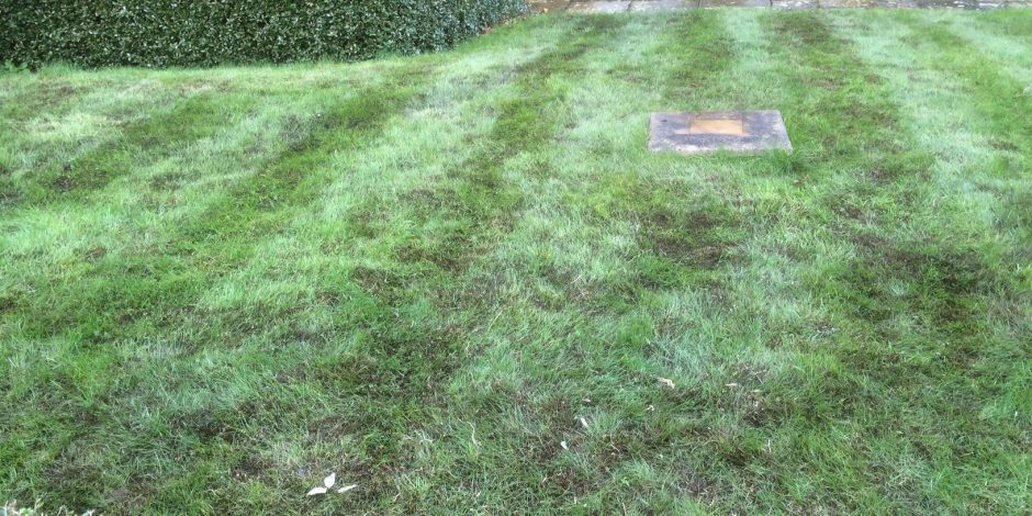 Lawn Doctor – Moss control in your lawn