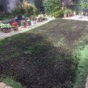 Lawn renewal and restoration service