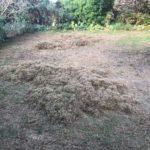 Sulgrave garden lawn gets makeover