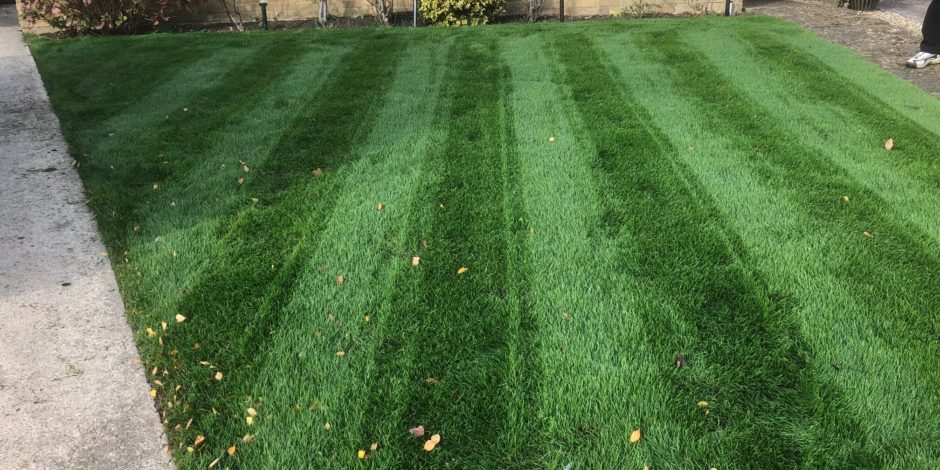 Brackley Lawn restoration