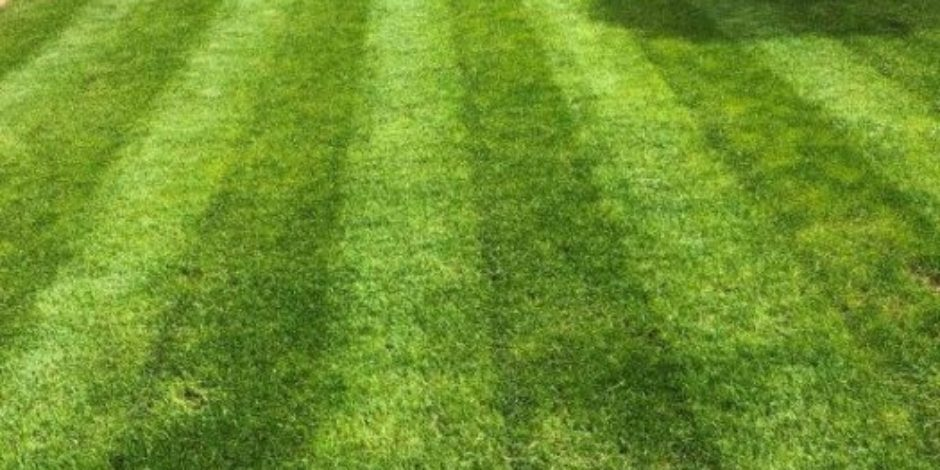 Taynton Lawn Renovation Treatment