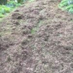 Sulgrave Scarification treatment